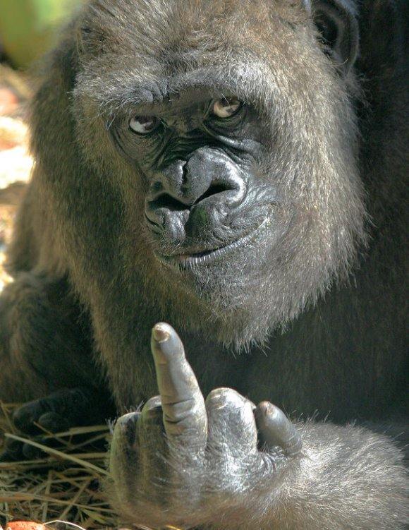 One_Gorilla__s_Opinion_by_tom2001