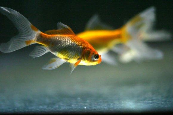 in_memory_of_fish_by_pharan1